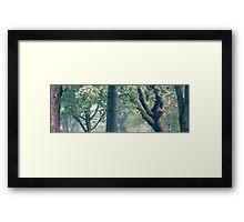 25.8.2012: Graveyard Trees Framed Print