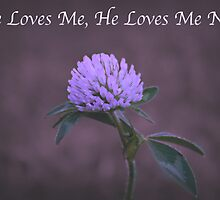 He Loves Me, He Loves Me Not by Sherry Hallemeier