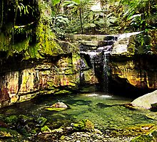 Moss Garden, Carnarvon Gorge, Queensland by Julia Harwood