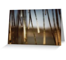 seashore sheoak I Greeting Card