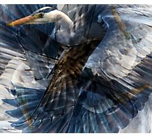 Designs Inspired By Nature: Heron Flight Photographic Print