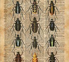 Beetles Bugs Zoology Illustration Vintage Dictionary Art by DictionaryArt