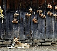 Dog With Onions by diana1912