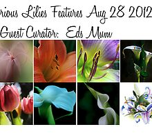 All Glorious Lilies Features Guest Curator EdsMum Aug 28 2012 by Marilyn Cornwell