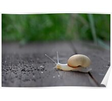 The Snail Poster