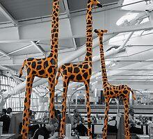 Giraffes - Standing Tall by tazbert