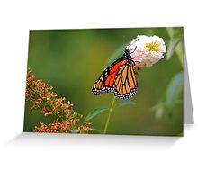 Monarch on the Rodgersia Greeting Card