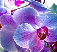 Pink orchids by Plrang Art
