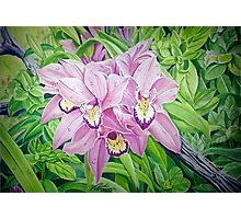 Wild Orchids _01 Photographic Print