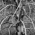 Dead Fir Tree by David Kocherhans