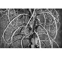 Dead Fir Tree Photographic Print
