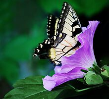 Knee-deep In Nectar... by Laurie Minor