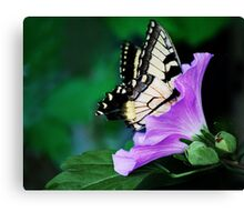 Knee-deep In Nectar... Canvas Print