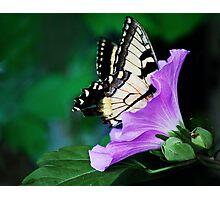 Knee-deep In Nectar... Photographic Print