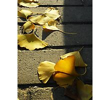 Fallen Leaves 01 Photographic Print