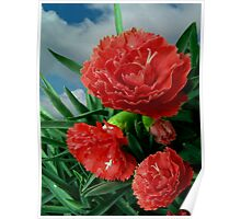 Pink Carnations Poster