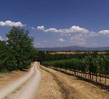 Castiglion Fibocchi, Tuscany, Italy by newbeltane