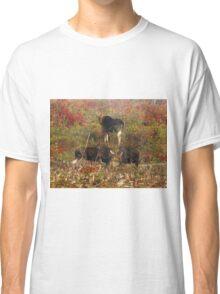 Maine bulls & cow moose Classic T-Shirt