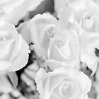 Black & White roses No2 by Marko  Gligorov