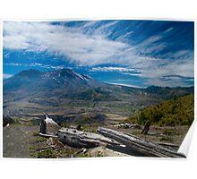 Mt St Helens Fallen Tree Poster