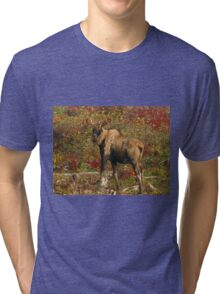 Maine Bull Moose in the fall Tri-blend T-Shirt