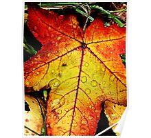 Fall Leaf Poster