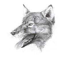 European wolf Photographic Print