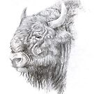 Wisent (European Bison) by A V S TURNER