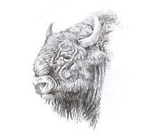Wisent (European Bison) Photographic Print