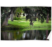 Live oaks and Spanish moss Poster