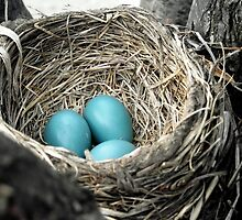 Robins Egg Blue by Tracy M