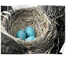 Robins Egg Blue Poster