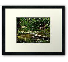Forest Pond... Framed Print