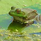 Once Upon A Lily Pad by lorilee