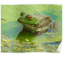 Once Upon A Lily Pad Poster