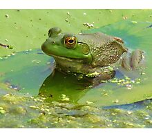 Once Upon A Lily Pad Photographic Print