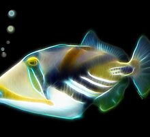 Picasso Trigger Fish for Cris by Liane Pinel