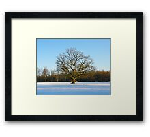 Lonely Winter Framed Print