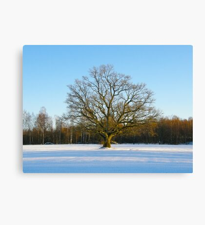 Lonely Winter Canvas Print