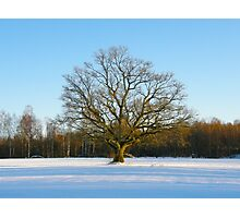 Lonely Winter Photographic Print