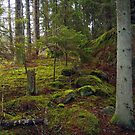 In the forest by globeboater
