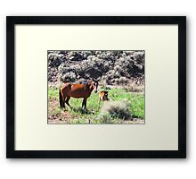 Mare And Foal Mustang Framed Print