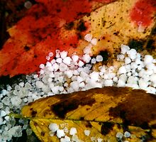 Autumn's First Snow - Johnson, VT by PASpencer