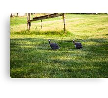 GUINEA FOWL Canvas Print