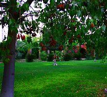 garden&flowers by Yannis-Tsif