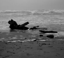 Driftwood 2 by Jess Meacham