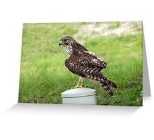 Neighborhood Hawk Greeting Card