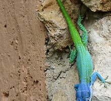 Multi colored lizard. by Anne Scantlebury