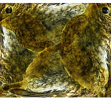 Designs Inspired By Nature: Juvenile Robin Photographic Print