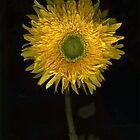 Botanica by Barbara Wyeth